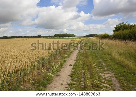an english bridleway beside a ripening wheat field in the picturesque landscape of the yorkshire wolds in summer under a cloudy blue sky - stock photo