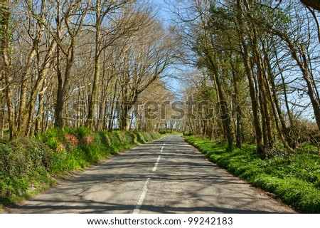 An English country road through trees, the B3315 in Cornwall. - stock photo