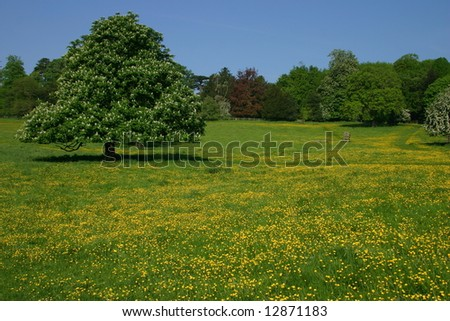 An English meadow at Hughenden Park Buckinghamshire full of springtime buttercups - stock photo
