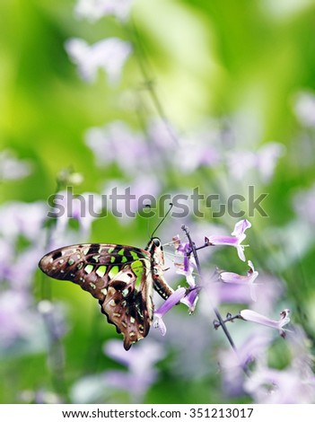 An exotic butterfly perched on a purple flower.  - stock photo