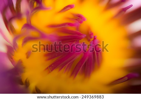 An extreme close up of lotus flower. Micro photography. - stock photo