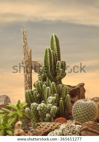 An Extreme Depth of Field Photo of Cactus at Sunset - stock photo