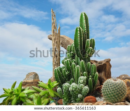 An Extreme Depth of Field Photo of Ornamental Cactus      - stock photo
