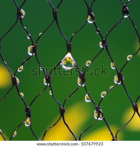 An extreme macro of drops of water with flowers reflected in them. - stock photo