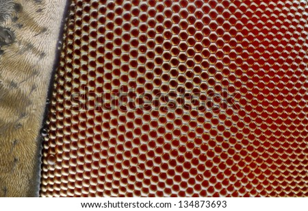 An extreme sharp 25x close up of the compound eye of a fly. - stock photo