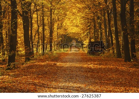 An forest in fall with leaves in beautiful orange autumn colors - stock photo