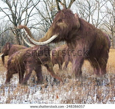 An illustration of a family of Woolly Mammoths feeding on wild grass in an ice age forest. The Woolly Mammoth is an extinct species of elephant existing during the later part of the Pleistocene Epoch. - stock photo
