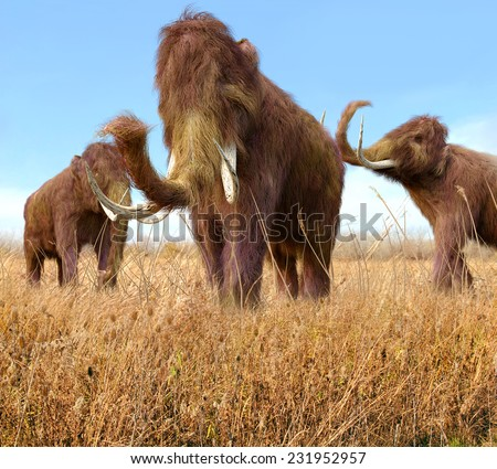 An illustration of a group of Woolly Mammoths feeding on wild grass in an ice age grassland during an autumn feast.  - stock photo