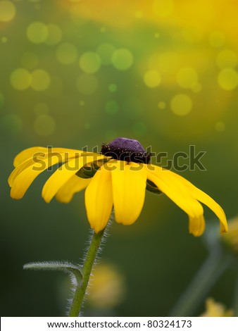 An image of a dreamy yellow flower - stock photo