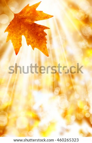 an image of a leaf in autumn - stock photo