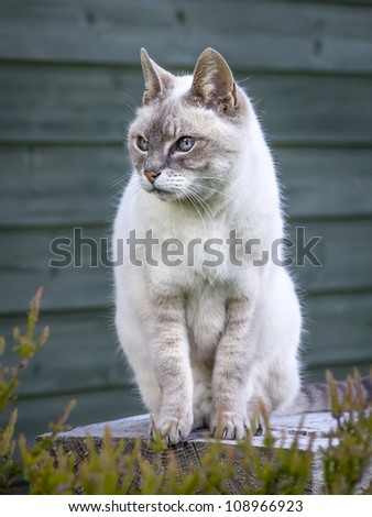 An image of a nice cat portrait - stock photo