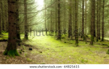 An image of a nice green forest - stock photo