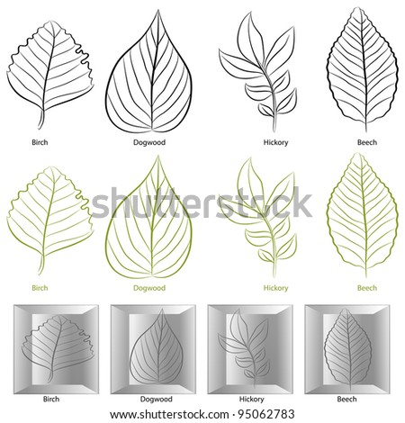 An image of a set of tree leaf types. - stock photo