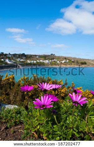 An image of African Daisies and a view of the fishing village, Coverack, in Cornwall in the background. - stock photo