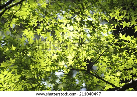 An Image of Autumn Leaves - stock photo