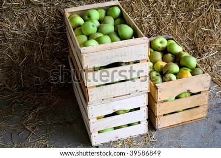 An image of boxes with green ripe apples - stock photo