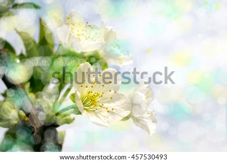 an image of flowers - stock photo