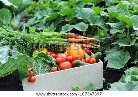 An image of fresh vegetables in a crate - stock photo