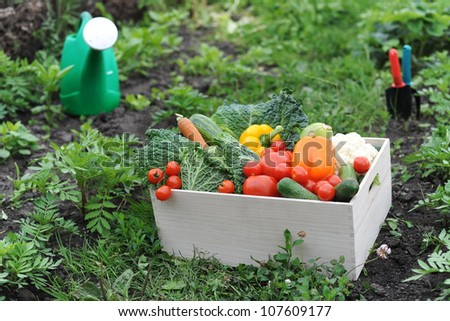 An image of fresh vegetables in the box - stock photo