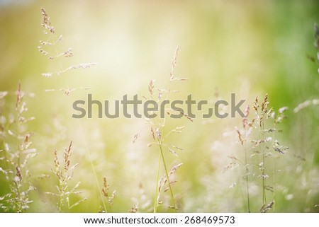 An image of green grass background - stock photo