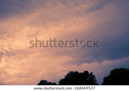An image of snow geese in flight - stock photo