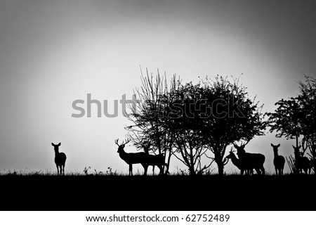 An image of some deer in the morning mist - stock photo