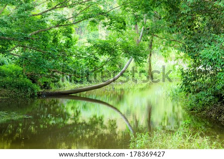 An image of the beautiful tropical forest in Australia - stock photo