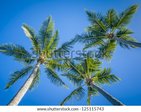 An image of three palm trees and the blue sky - stock photo