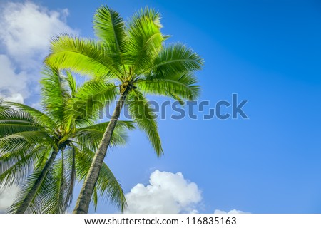 An image of two nice palm trees in the blue sunny sky - stock photo