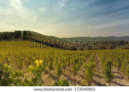 An image that echoes the typical landscape of the hills of Tuscany, in the Chianti area in Italy. In the background, crops of grapes in vineyards. - stock photo