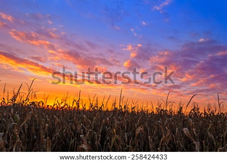 An Indiana cornfield is topped by a colorful autumn sunset sky. - stock photo