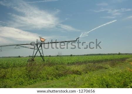 An irrigator sprays water onto the corn field. - stock photo