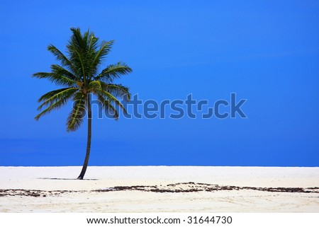 An isolated coconut palm on a beach in the Bahamas. - stock photo