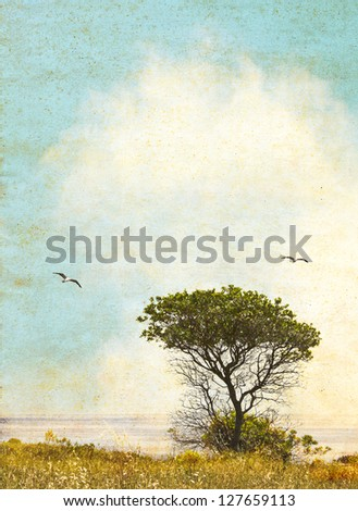 An oak tree along the California coast with ocean fog in the background.  Image done in vintage colors with pleasing grunge textures and paper grain. - stock photo