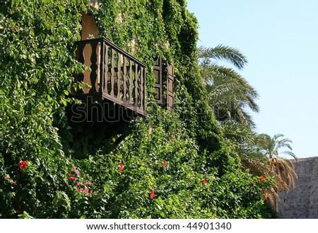 Balcony Plant Plants Clematis Balcony