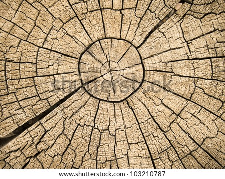 An old tree stump shows cracks and fractures radiating from the center that have resulted from the natural weathering from being left in the open air. - stock photo