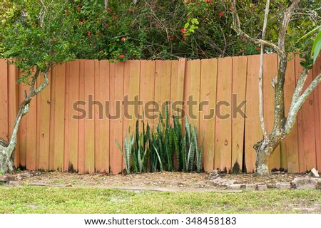 An old uneven wooden stockade fence with citrus trees on either side and snake plant in the middle in Bonita Springs, Florida. - stock photo
