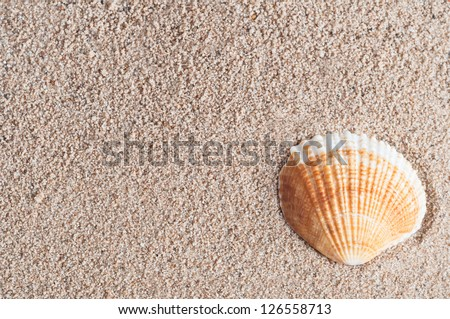 An orange and white fan shaped seashell, nestled into the lower right corner of grainy damp sand - which provides texture and copy space. - stock photo