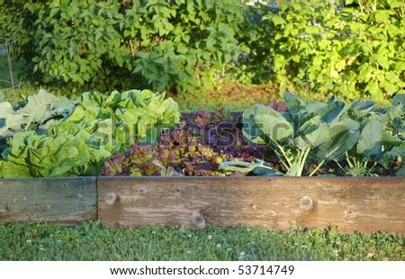 An organic garden on a spring morning - stock photo