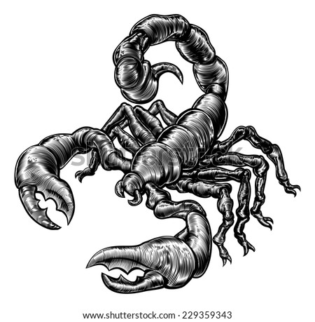 An original illustration of a scorpion in a vintage woodblock style - stock photo