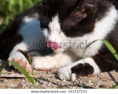 An outdoor cat licking its nose. - stock photo