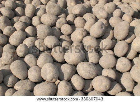 An Outdoor Collection of Freshly Harvested Potatoes. - stock photo
