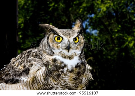 An owl with big orange eyes, looking at you quizzically. - stock photo