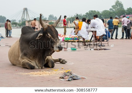an Ox relaxing in a ghat on the banks of the Ganges river, Haridwar - India - stock photo