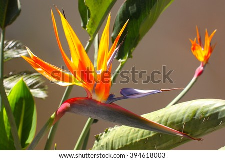 An up close image of a bright orange flower - stock photo