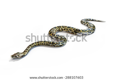 Anacondas snake on a white background. - stock photo