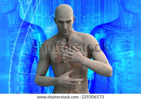 anatomical vision of blood circulation of the human heart - stock photo