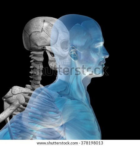 Anatomy concept or conceptual human man body chest, head blue black background, metaphor to medical, science, health, male, biology, medicine, bone, anatomical, muscular, system, face, cranium, spine - stock photo