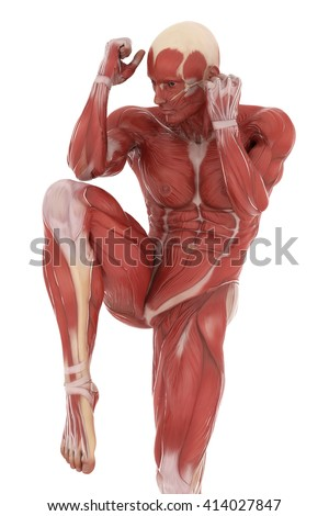 Anatomy muscle map on white isolated - kick box - stock photo