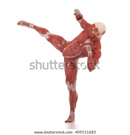 Anatomy muscle map white isolated - fight pose - stock photo